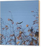 Soaring In Autumn  Wood Print