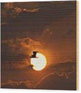 Soaring In The Sun Wood Print by Tony Reddington