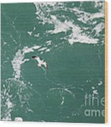 Soaring Over The Falls Waters Too Wood Print