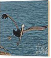 Soaring Pelican Wood Print