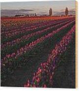 Soaring Spring Colors In Skagit Wood Print
