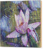 Water Lily Photography Tender Moments  Wood Print