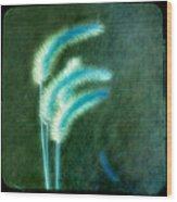 Soft Blue Grass Wood Print