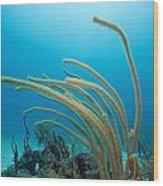 Soft Coral Underwater Wood Print