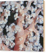 Soft Corals 6 Wood Print