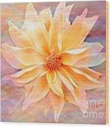 Soft Delightful Dahlia Wood Print
