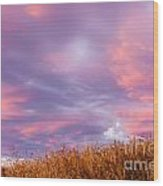 Soft Diffused Colourful Sunset Over Dry Grassland Wood Print