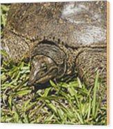 Florida Soft Shelled Turtle - Apalone Ferox Wood Print