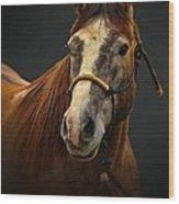 Soft Focus Horse Wood Print