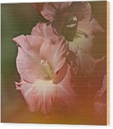 Soft Gladiolus Wood Print