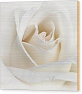 Soft Ivory Rose Flower Wood Print