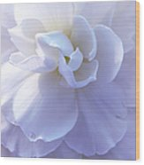 Soft Lavender Begonia Flower Wood Print