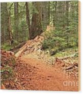 Soft Light Along The Cheakamus Lake Trail Wood Print
