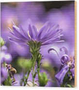 Soft Lilac Wood Print by Leif Sohlman