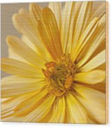 Soft Marigold Wood Print by Anne Gilbert