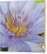 Soft Mauve Waterlily Wood Print