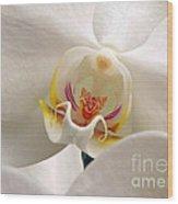 Soft Orchid Wood Print