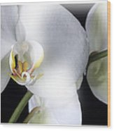 Soft Orchid Wood Print