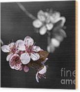 Soft Pink Blossom Wood Print