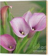Soft Pink Calla Lilies Wood Print