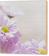 Soft Pink Daisies Wood Print