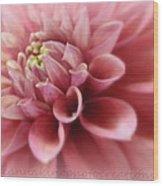 Soft Pink Dalia Wood Print