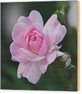 Soft Pink Miniature Rose Wood Print by Rona Black