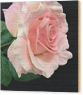 Soft Pink Rose 1 Wood Print