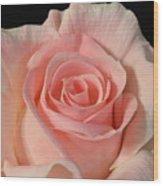 Soft Pink Rose Wood Print