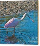 Soft Pink Spoonbill Wood Print