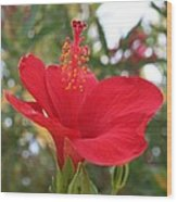 Soft Red Hibiscus With A Natural Garden Background Wood Print