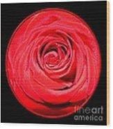 Soft Red Rose Closeup Wood Print