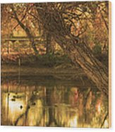 Soft Reflections Wood Print