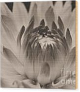 Soft Sepia Wood Print