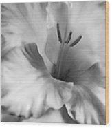Soft Silver Gladiola Flower  Wood Print