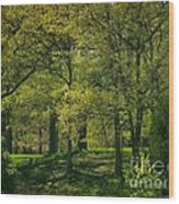 Soft Spring Light Wood Print