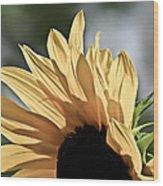Soft Sunny Sunflower Wood Print