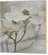 Soft Texture Of Spring Wood Print