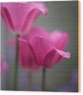 Soft Tulip Twilight Wood Print