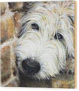 Soft Wheaten Terrier Wood Print by Natasha Denger