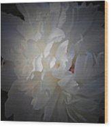 Soft White Peony Wood Print