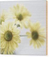 Soft Yellow Poms Wood Print