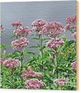 Softest Pink Wood Print