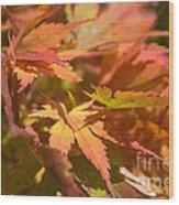 Softly Autumn Wood Print