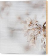 Softly Blossom Wood Print