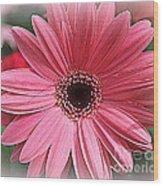Softly In Pink - Zinnia Wood Print