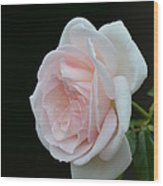 Softly Pink - Rose Wood Print