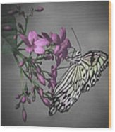 Softly Reflected On A Wing Wood Print by Jill Balsam