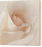 Softness Of A Peach Rose Flower Wood Print