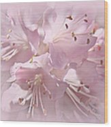 Softness Of Pink Pastel Azalea Flowers Wood Print